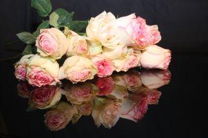 rozowe roze